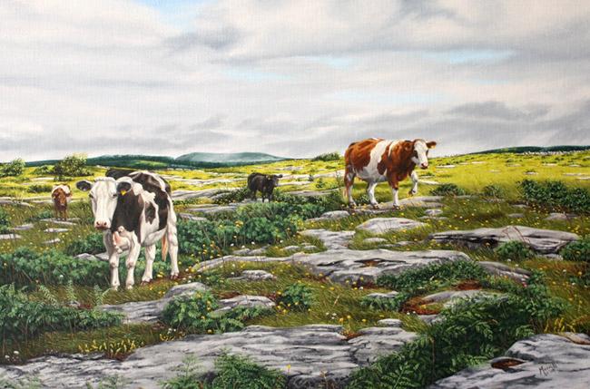 "Cows on the Burren - Oil on linen 24"" x 30"""