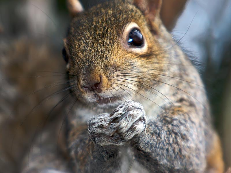 I really, really like squirrels.