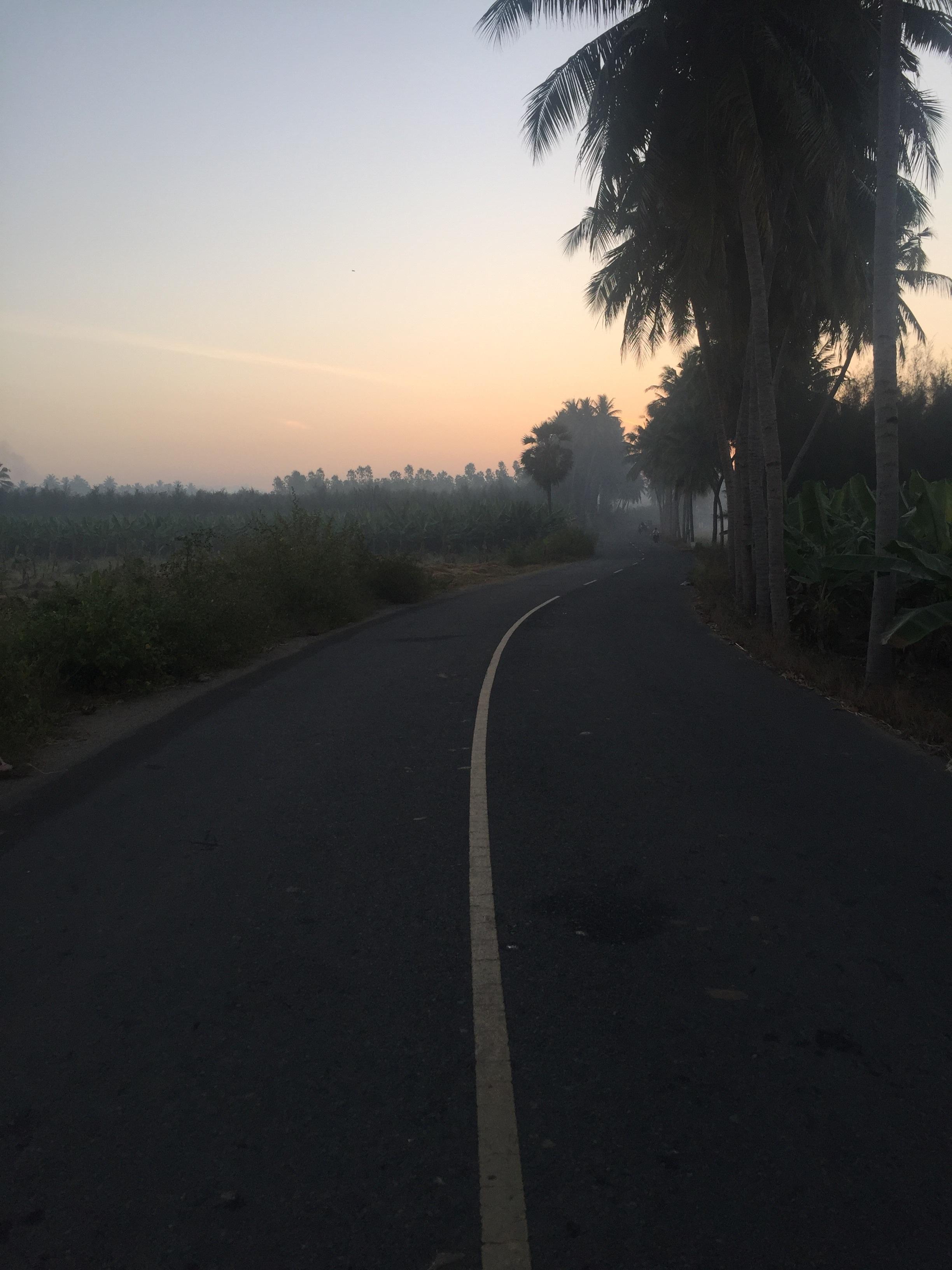 Strolling through the morning mist