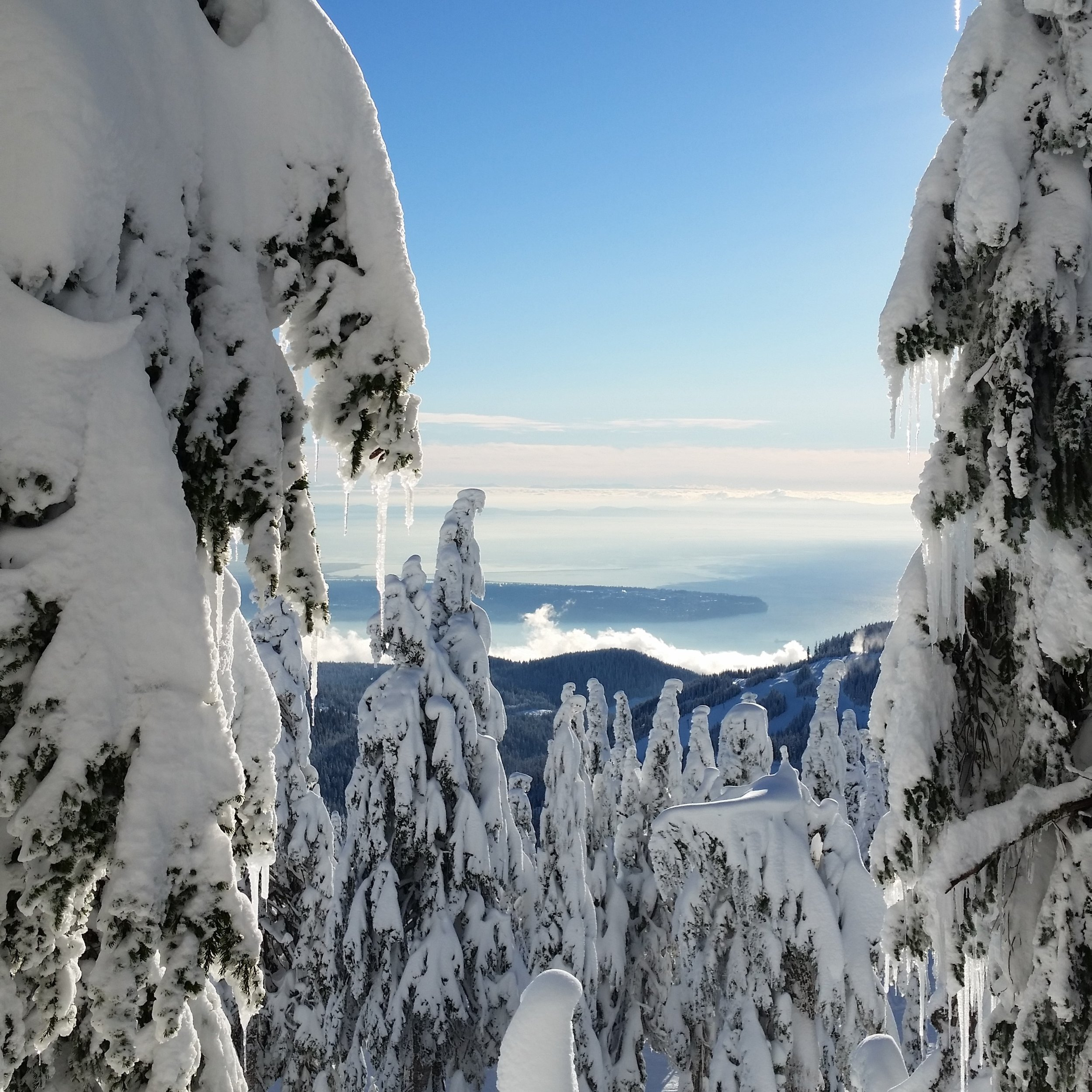 A peek of Bowen Island through the snow covered trees