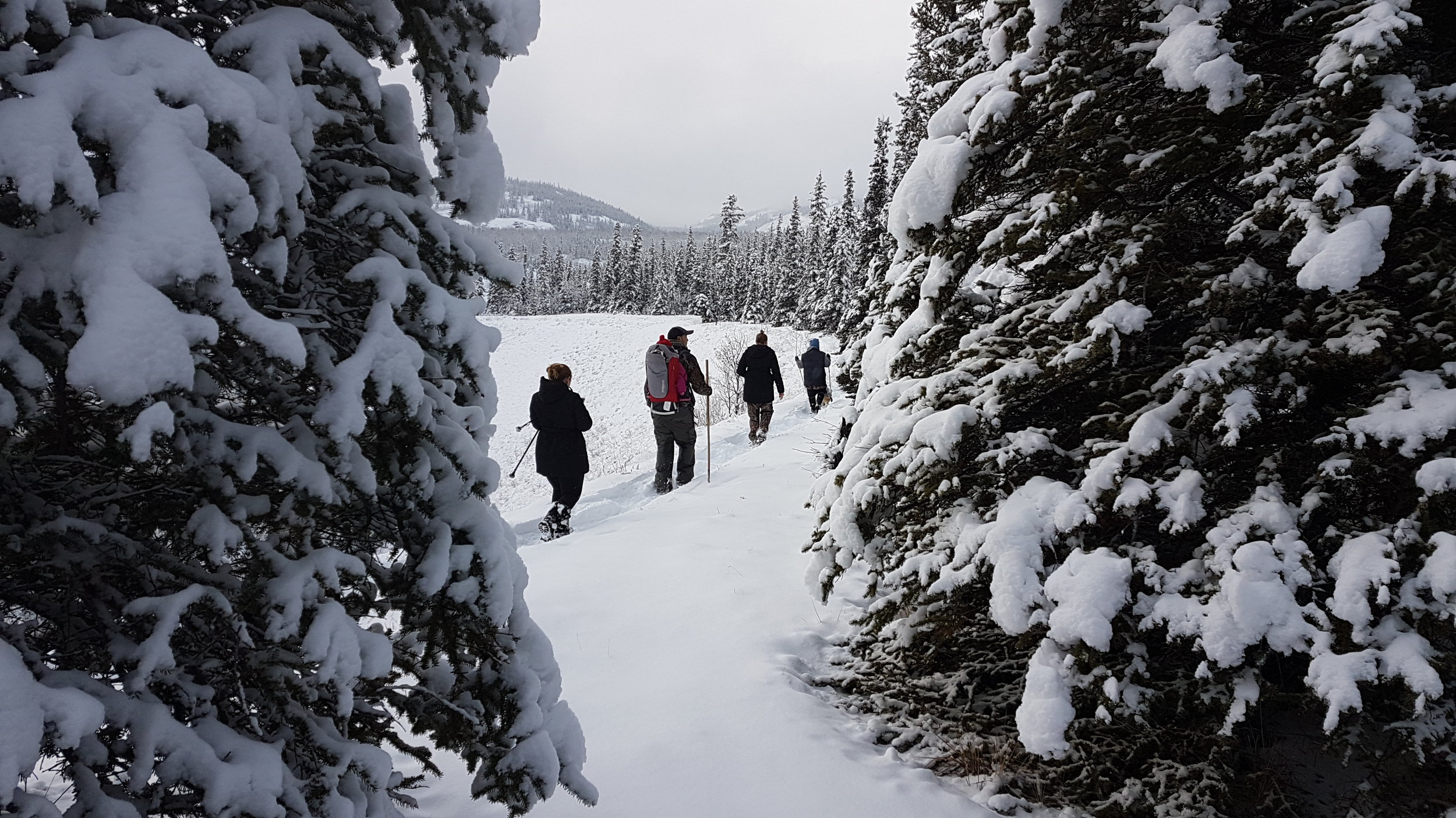 Our small group tours offer an excellent opportunity to experience winter in a new way