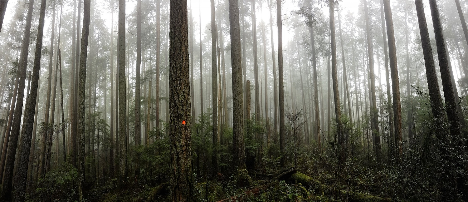 Baden Powell hiking trail around Vancouver