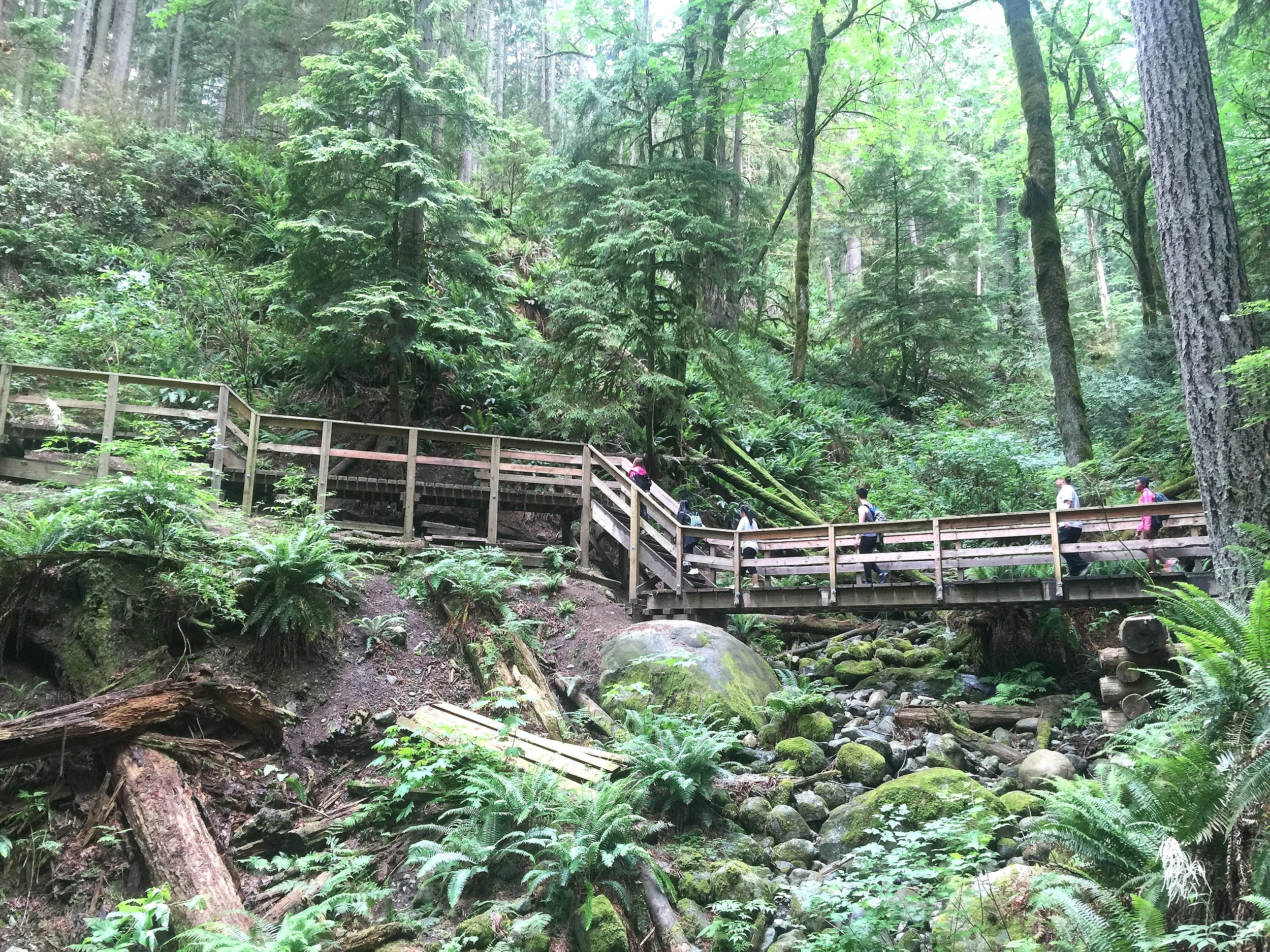 Hiking the Baden Powell Trail in Lynn Canyon