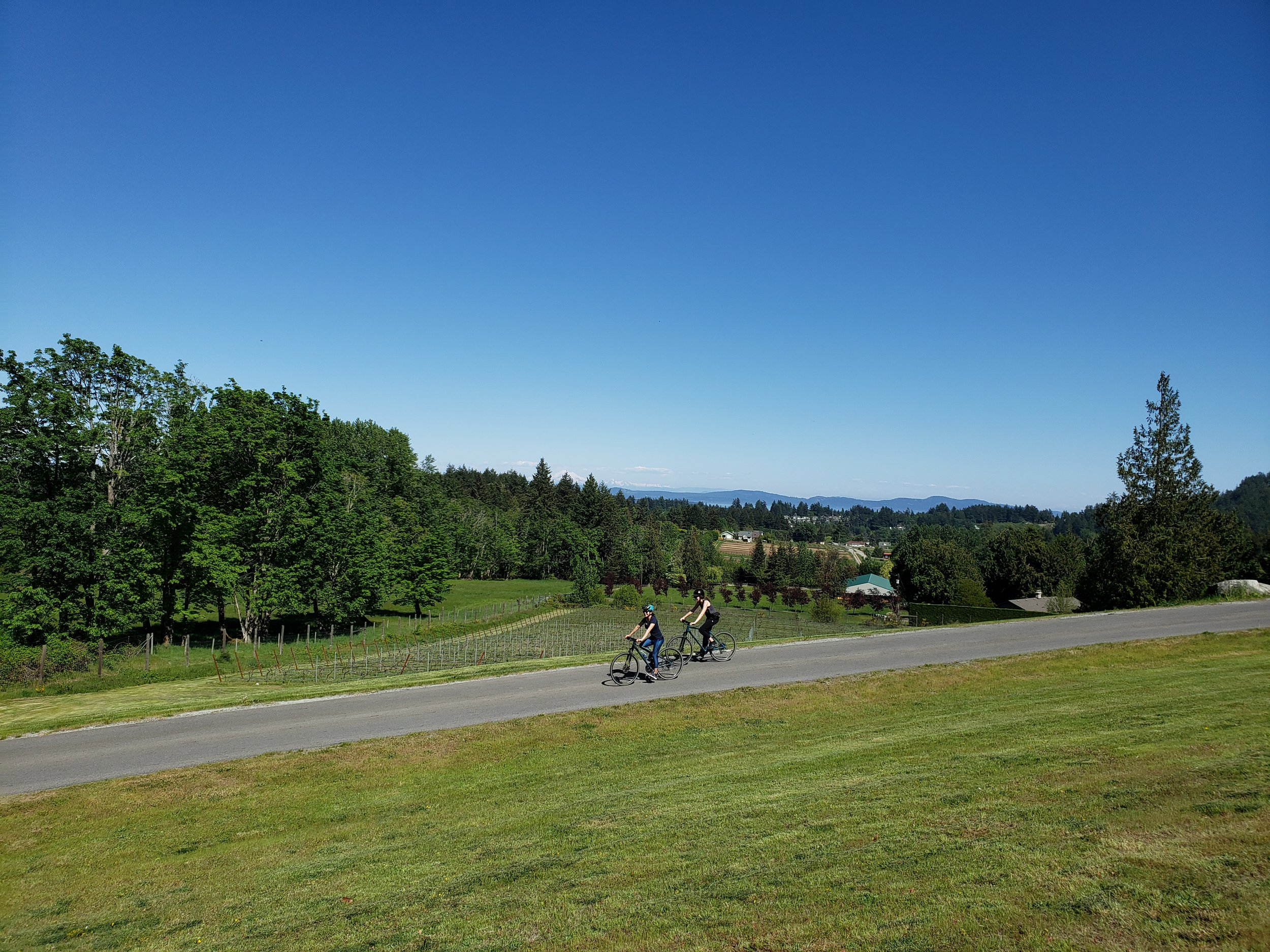 The hill down from the winery offers spectaular vistas over the San Juan Island, Mt. Baker & Olympic Peninsula.