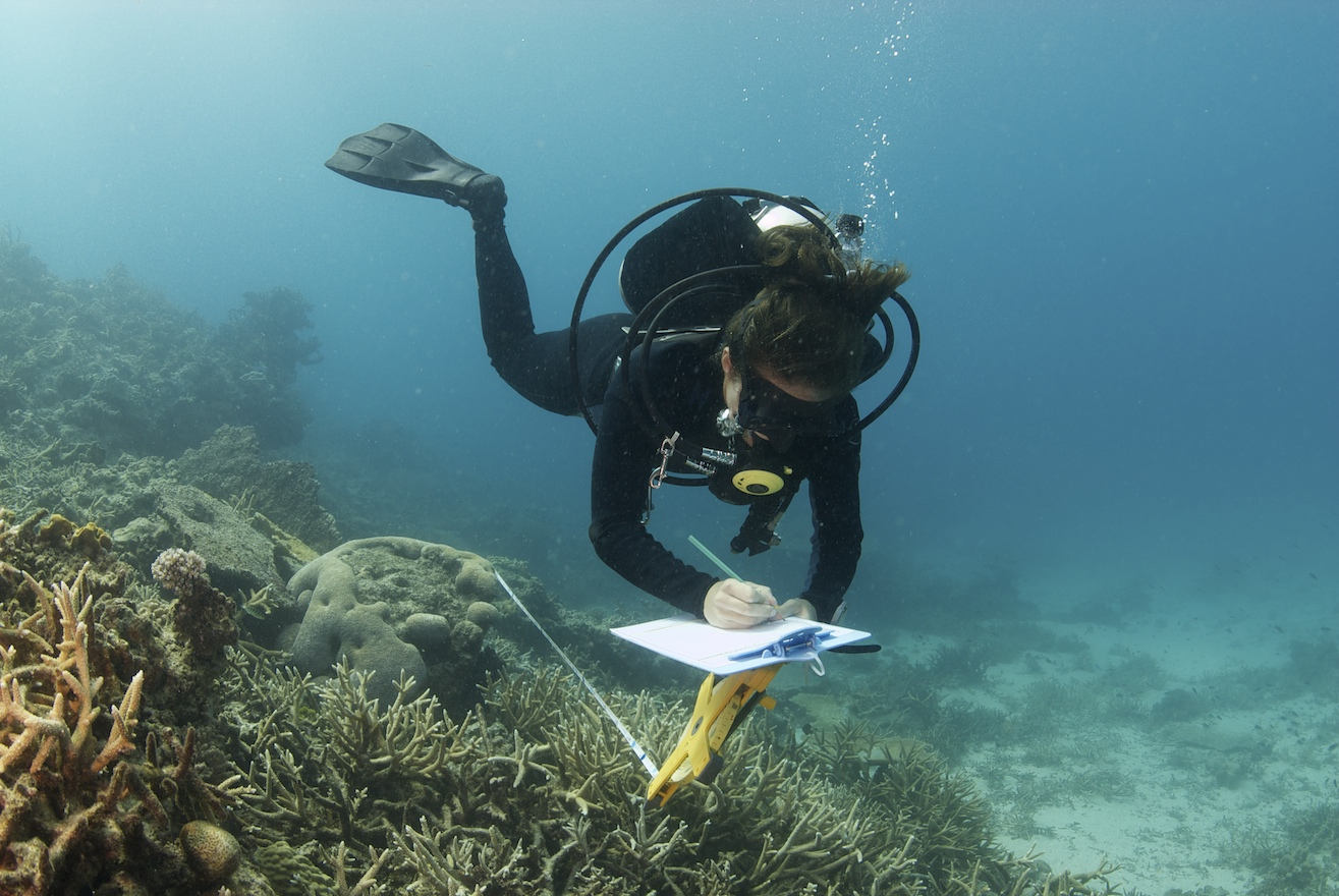 Conducting underwater visual census surveys in Fiji. Photo: Keith Ellenbogen