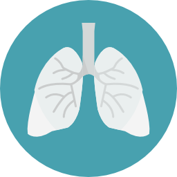 lungs (1).png