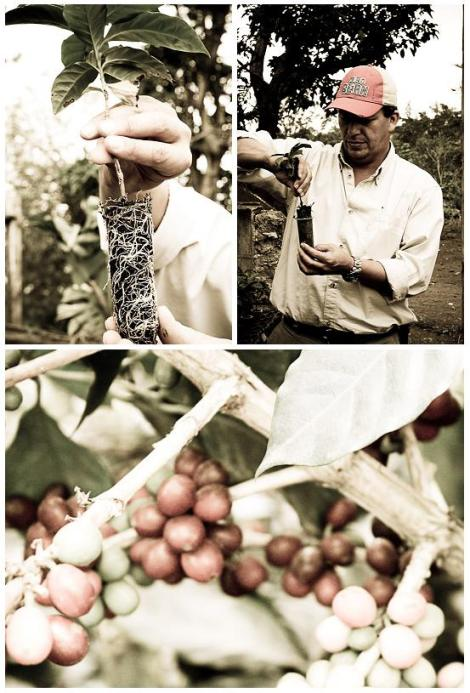 BEAN Producer Collage