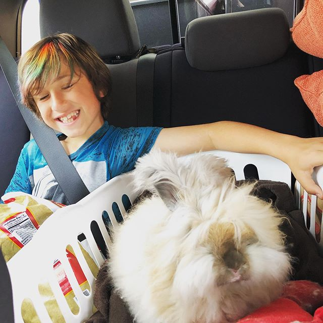 🐰 and Rocco going on a road trip.