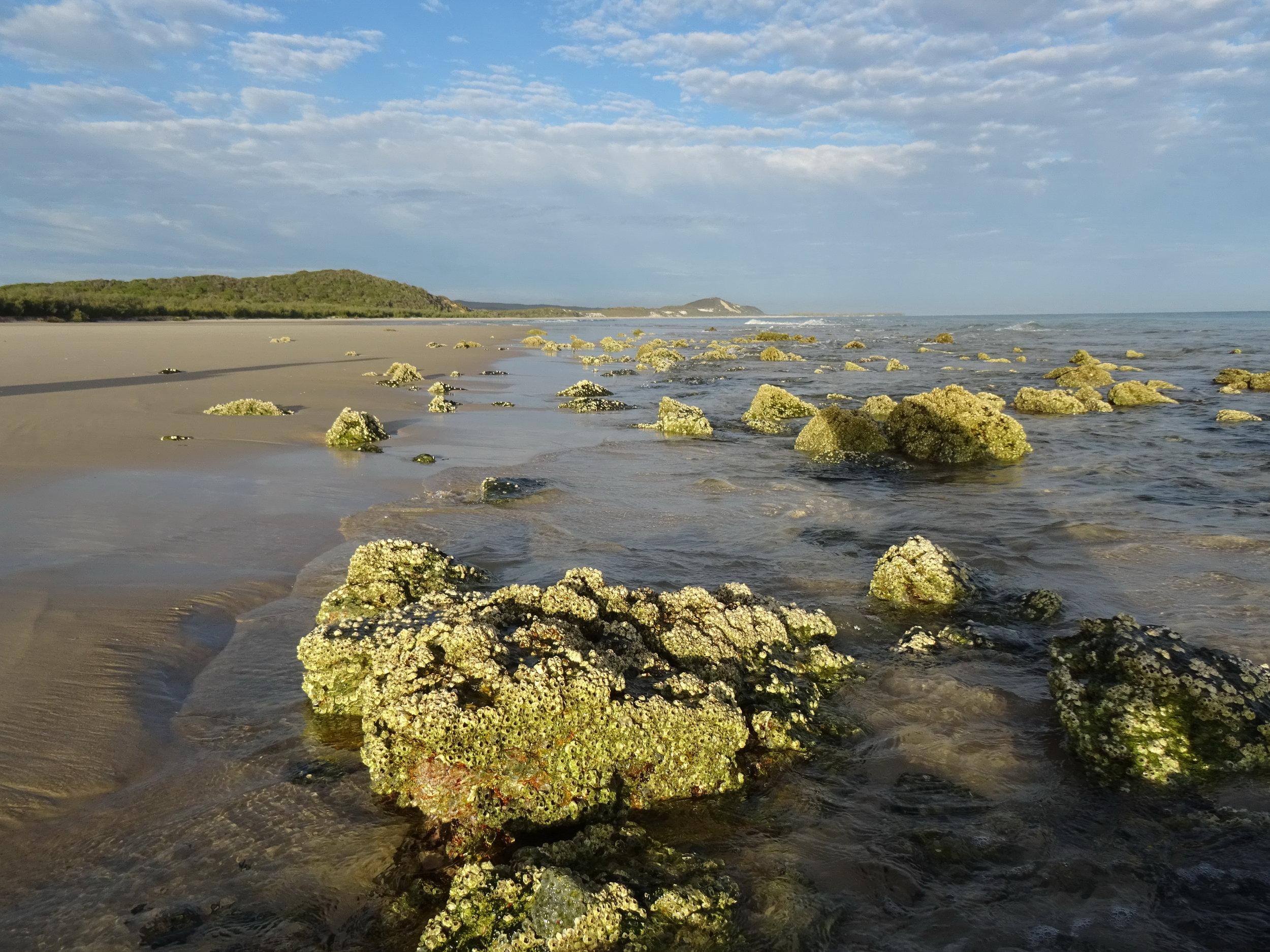 Moreton Island DSC01063 Qld.JPG
