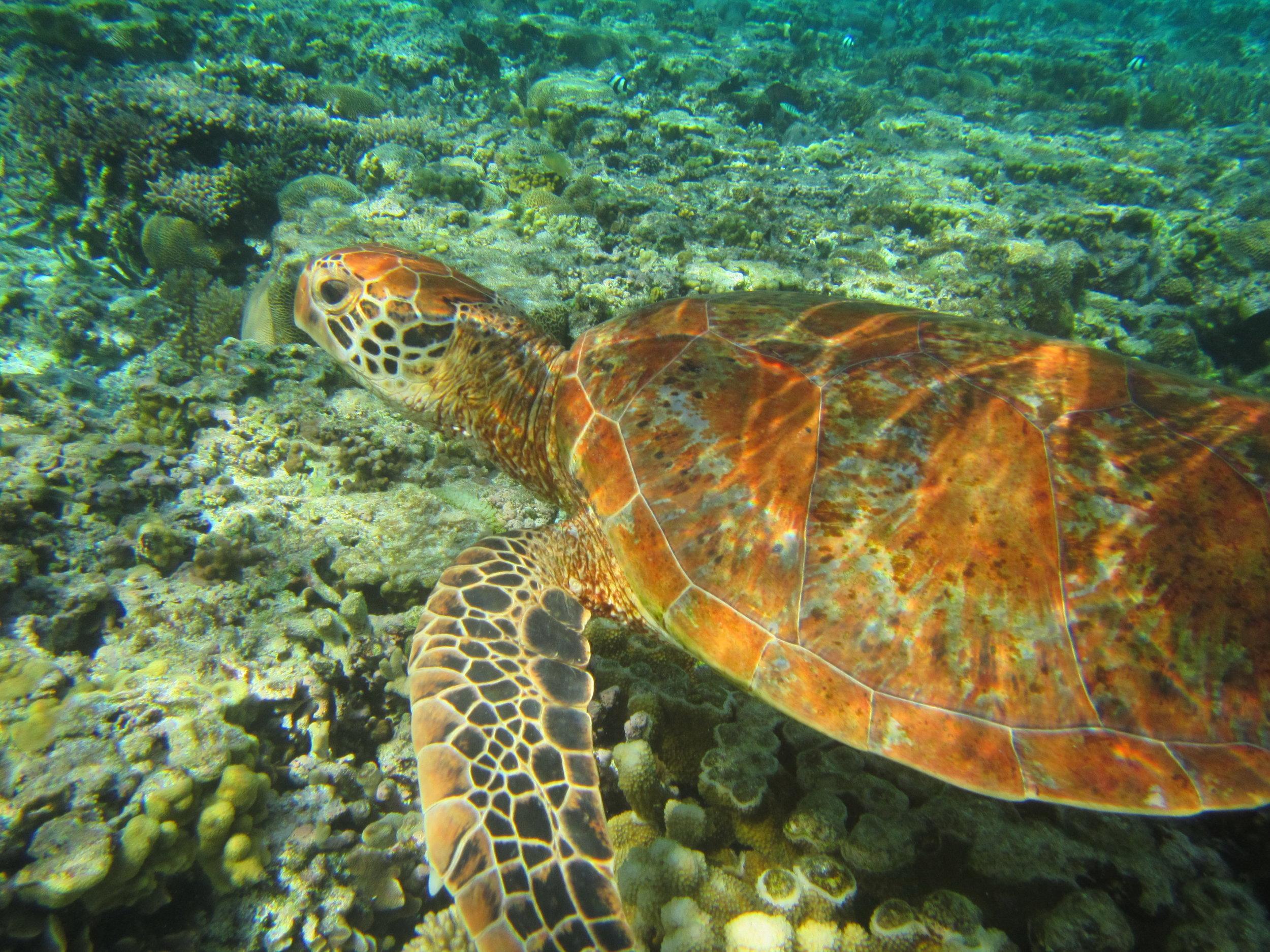 Lady Elliot Island IMG_5908 Qld.JPG