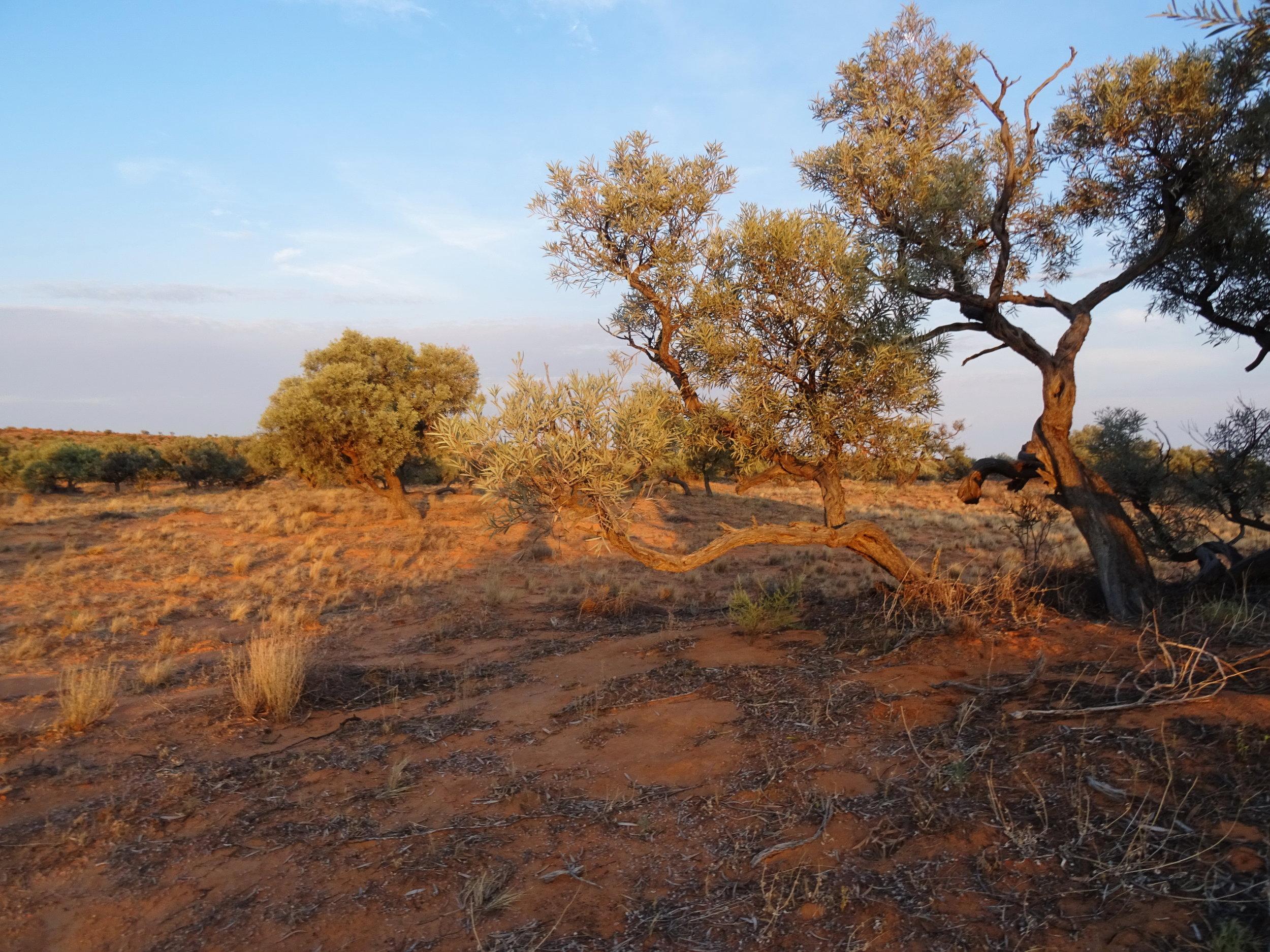 Qld, Simpson Desert