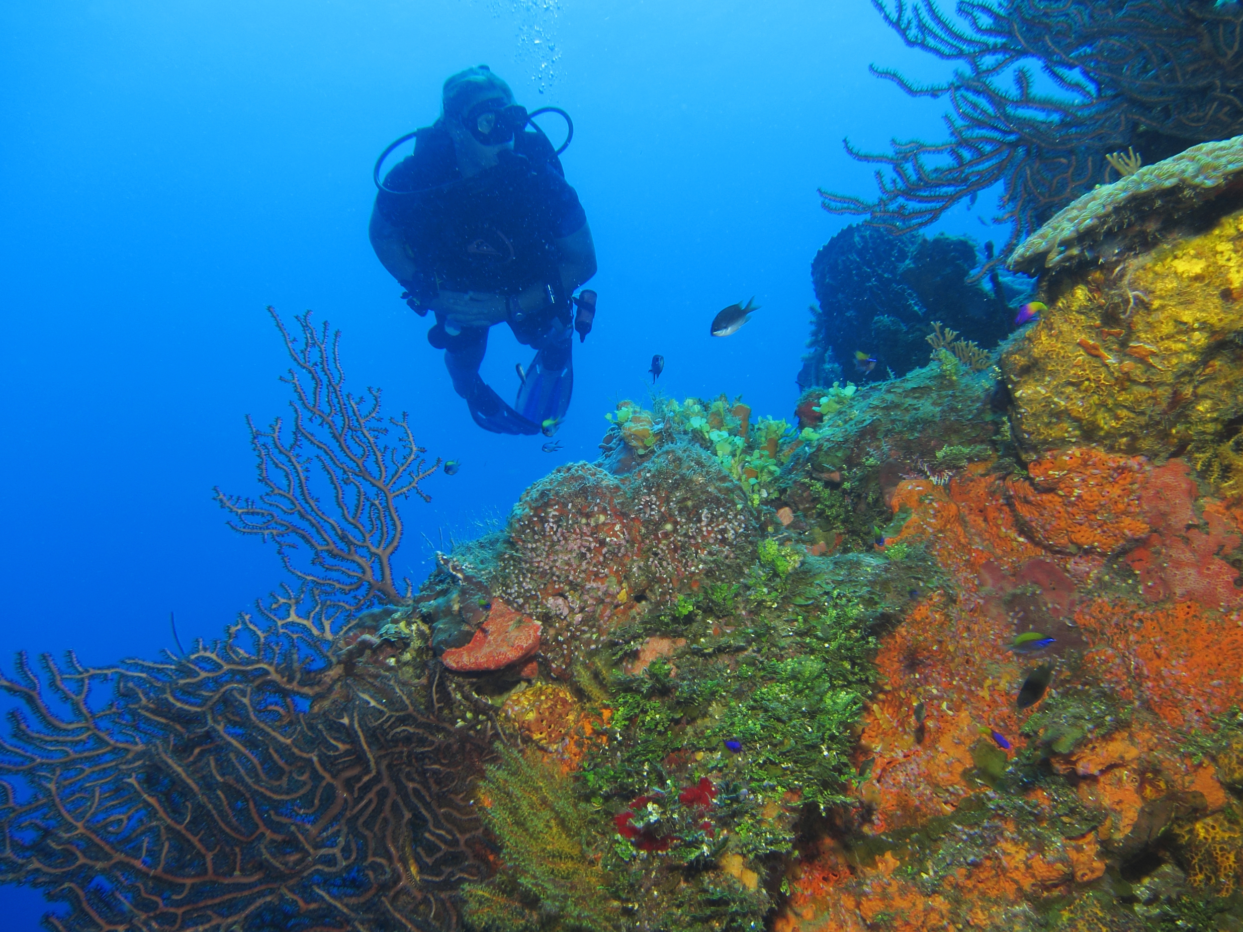 Wall diving, West End, Roatan