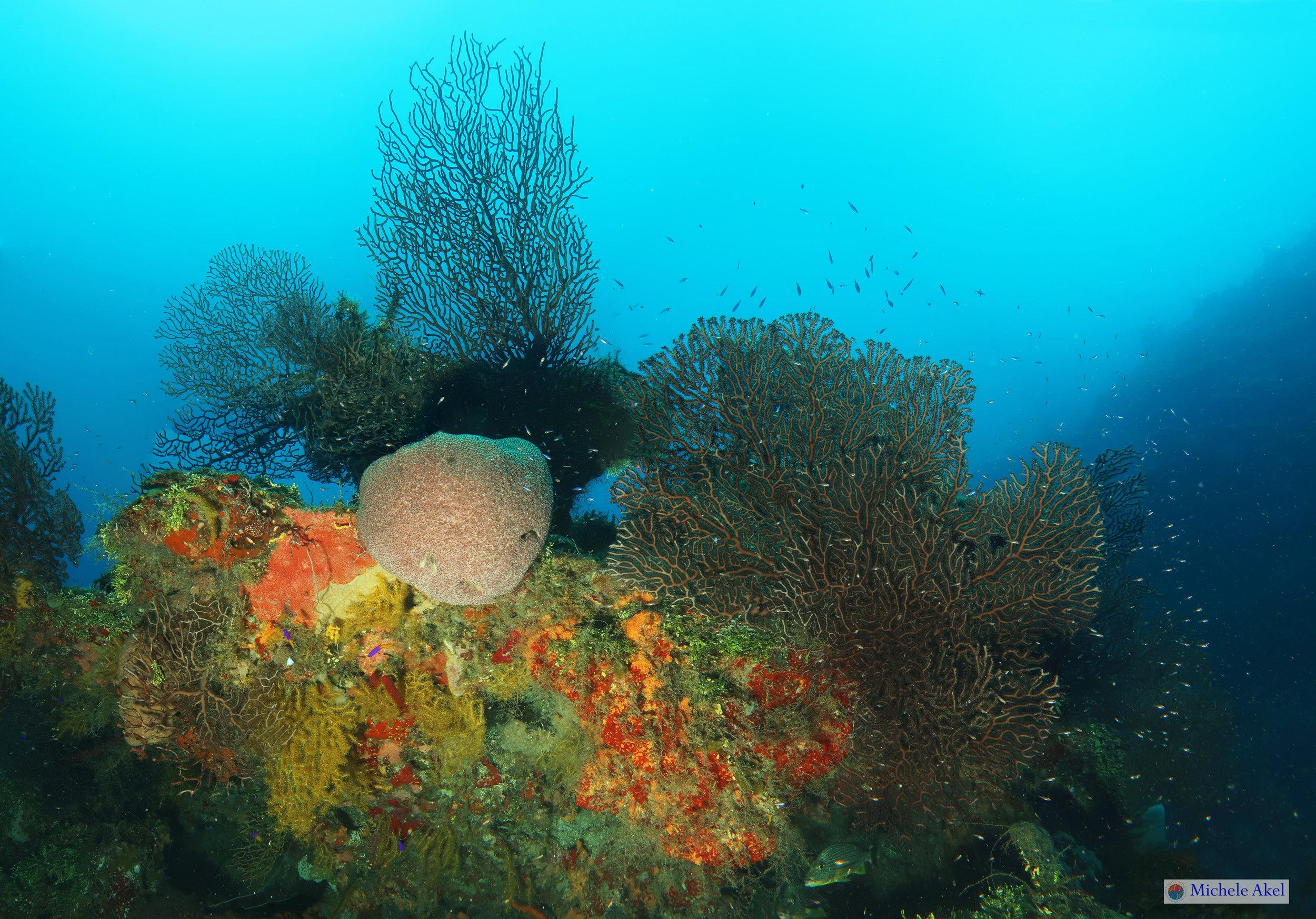 The pinnacle at Overheat reef, Roatan diving at it's best.