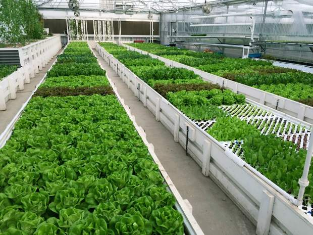 Pictured above an example of an aquaponic deep water culture system at Flourish Farms in Denver, Colorado