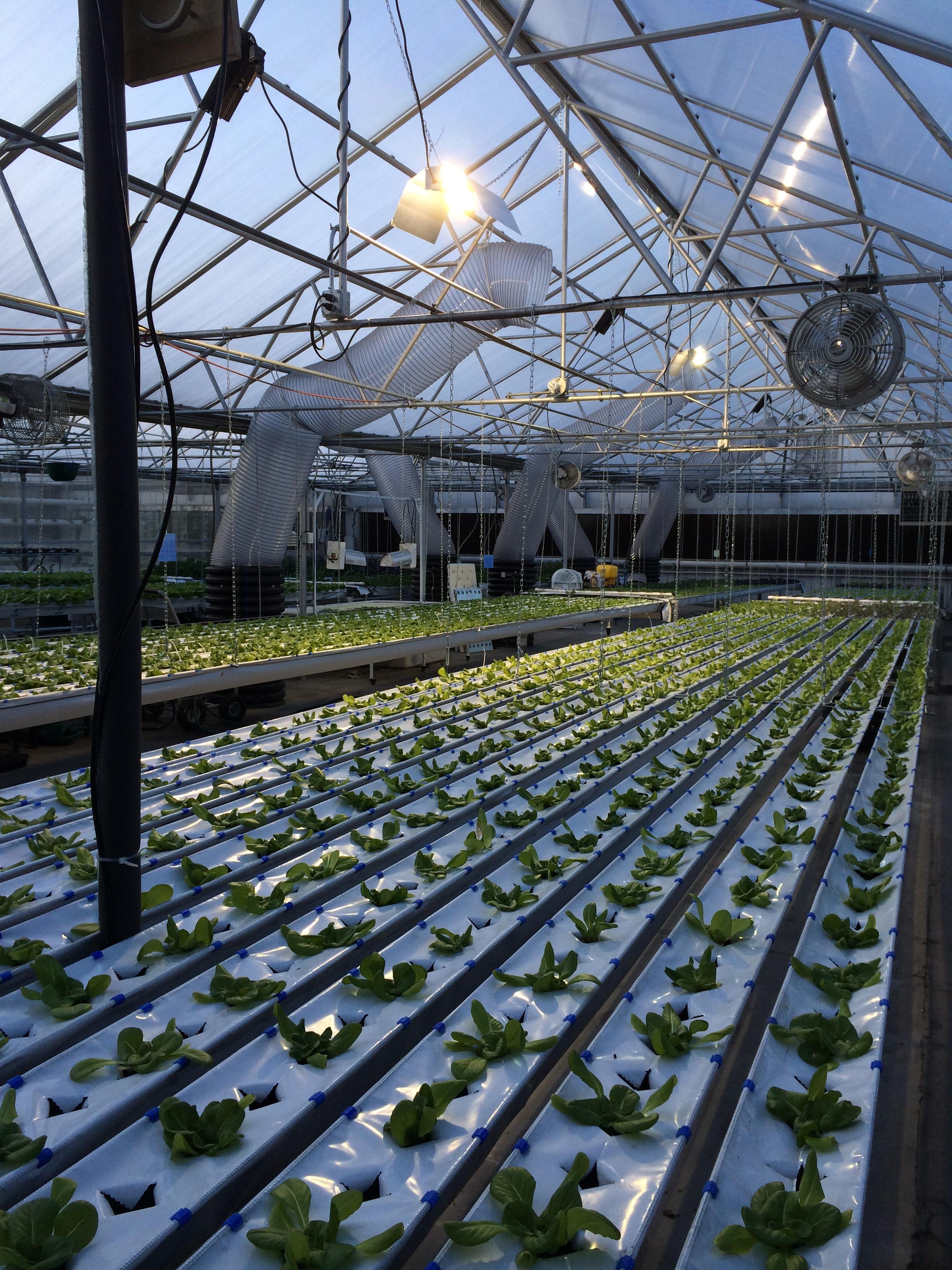 New Growing System; Hydrofarm at The GrowHaus Denver, Colorado