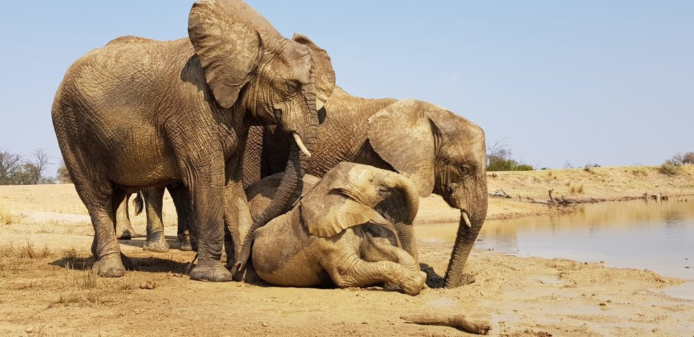 A day in the life of an AWE elephant — Adventures with elephants