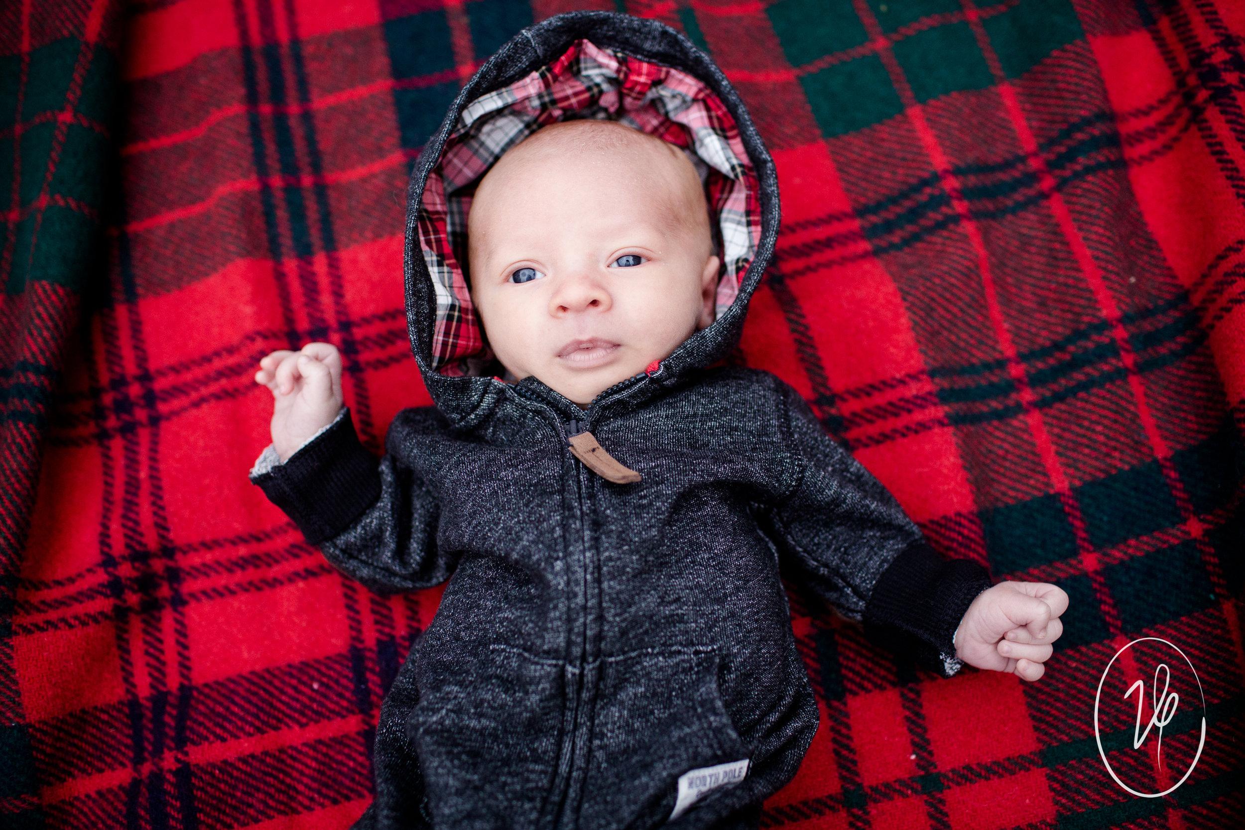 Viridian Ivy Images   Christmas Mini   Sylvania Family Photographer