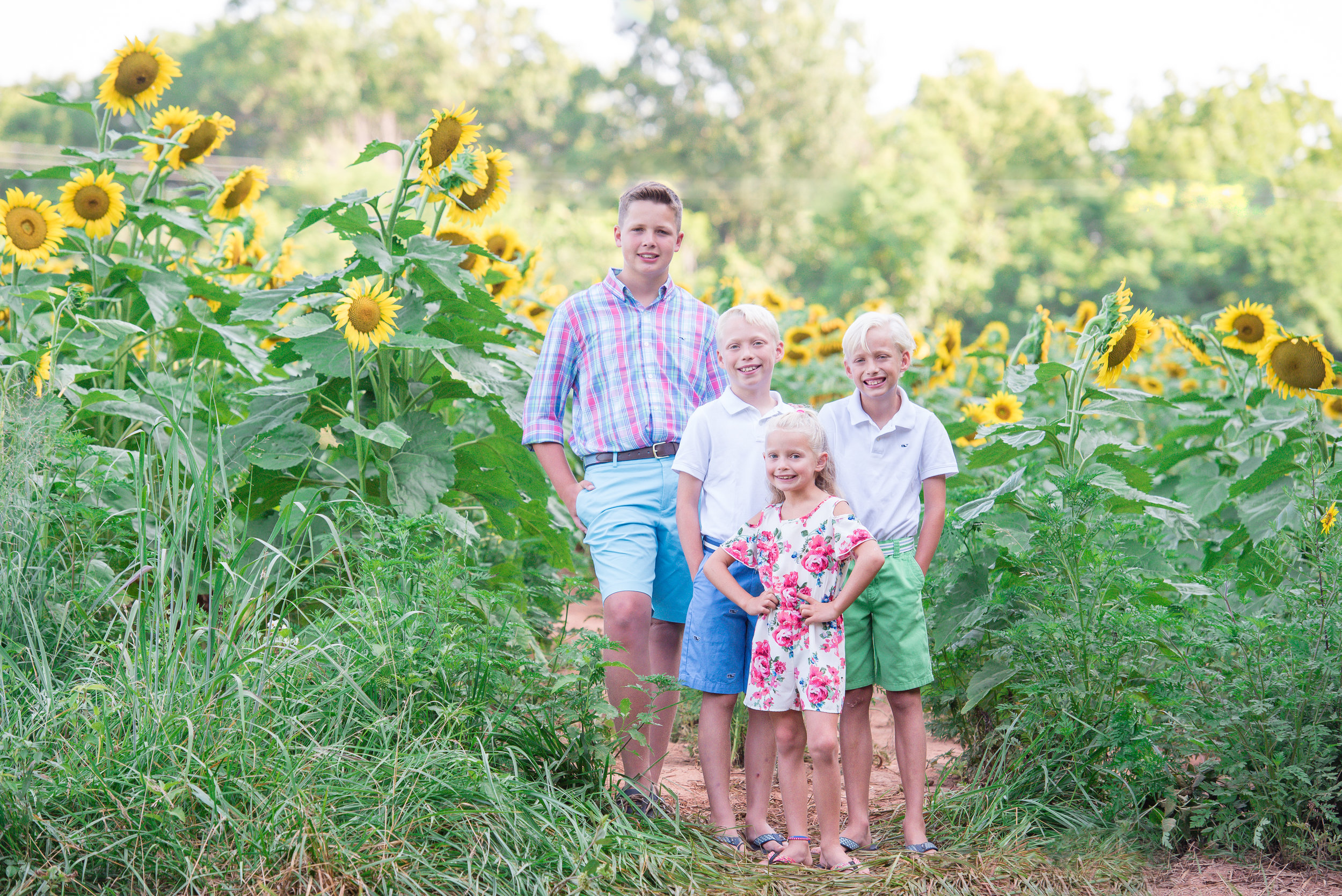 sunflower_mini_sessions_maryland