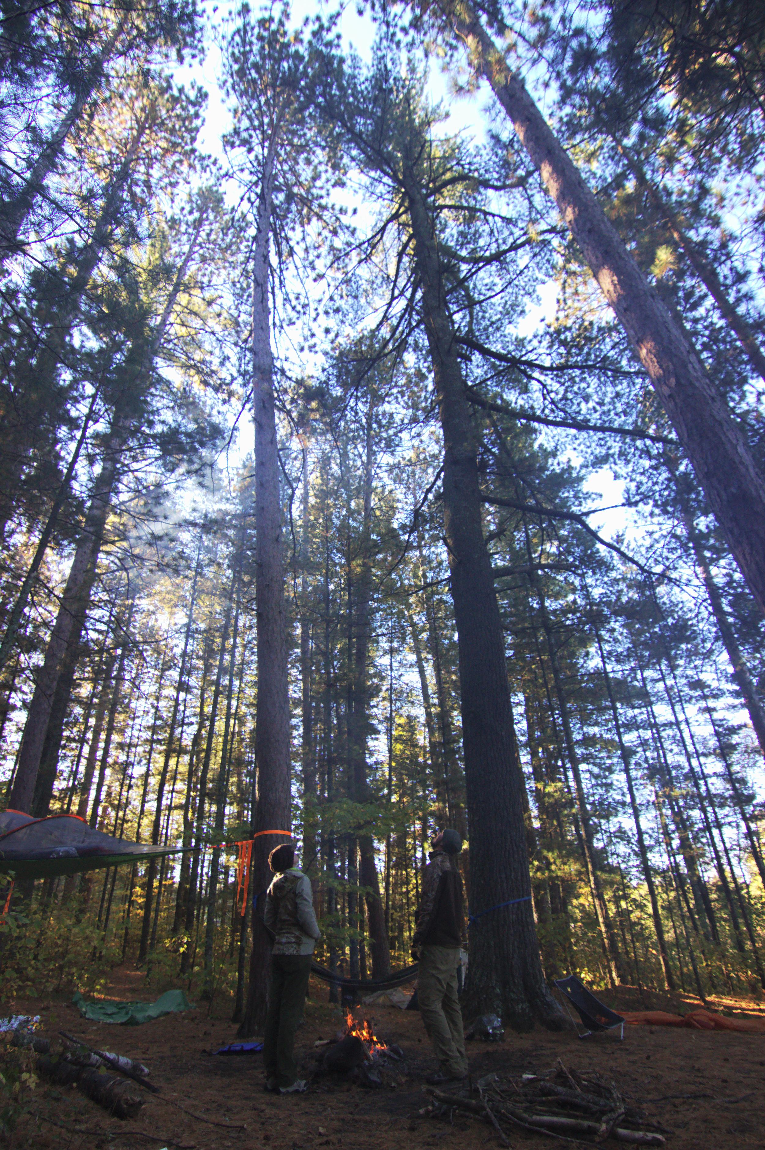 We <3 Trees.