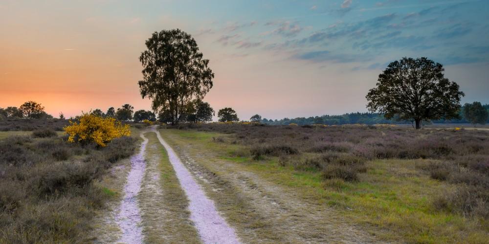 Utrechtse Heuvelrug kamperen