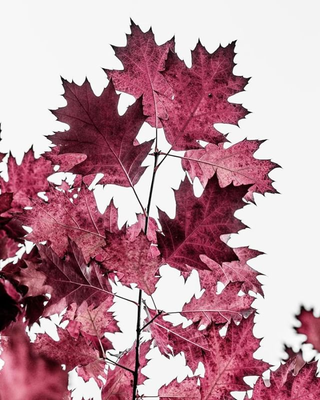 I love this season. Nature changes so fast these weeks. Autumn, please stay until next spring ;-)
