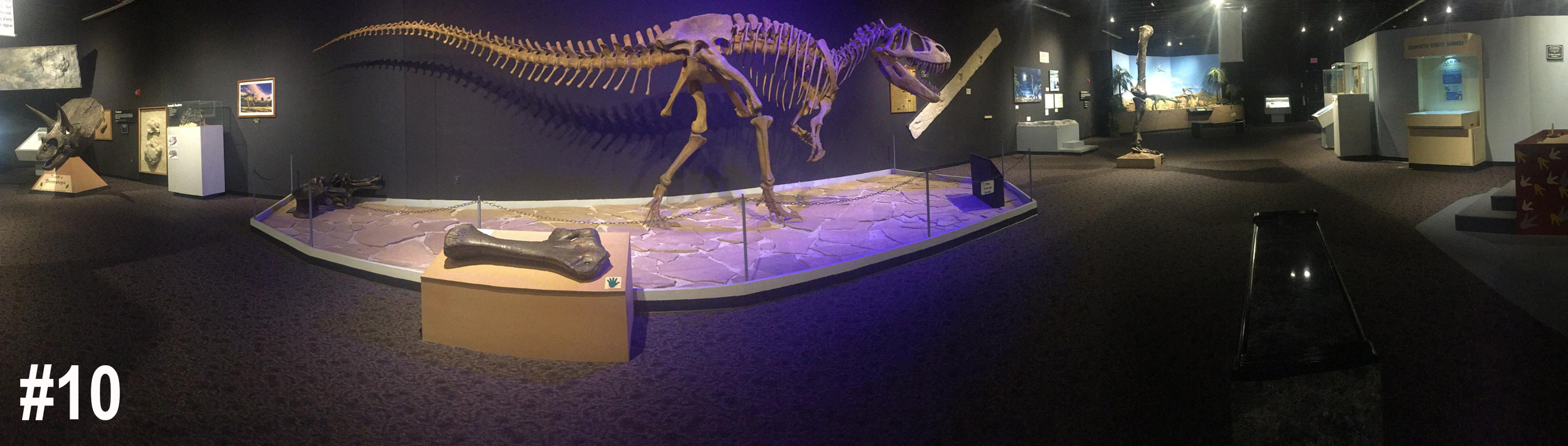 #10. I saw a billboard for a dinosaur museum in  New Mexico , so, naturally, I stopped to explore.