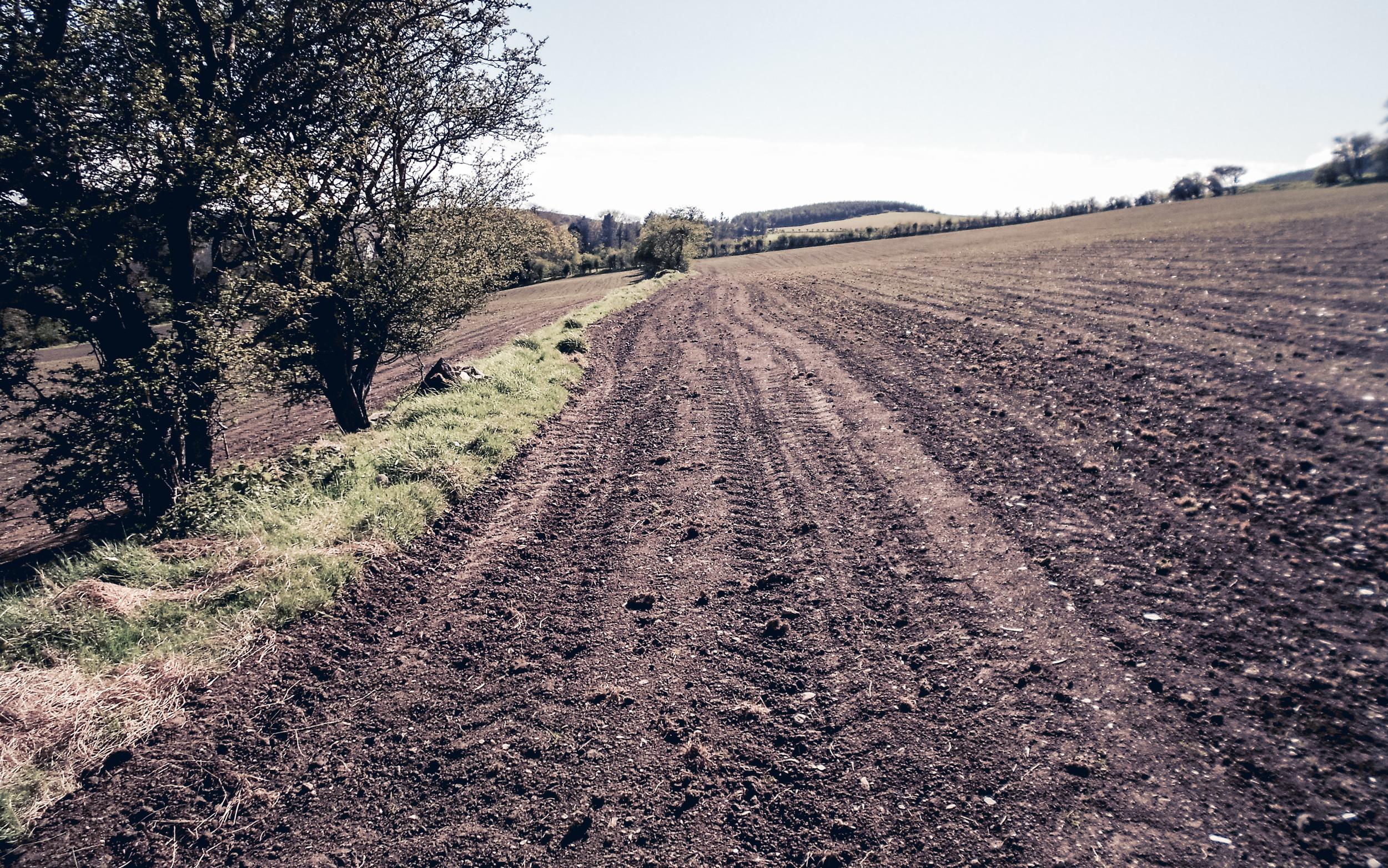 Sowing Game crop strips.jpg