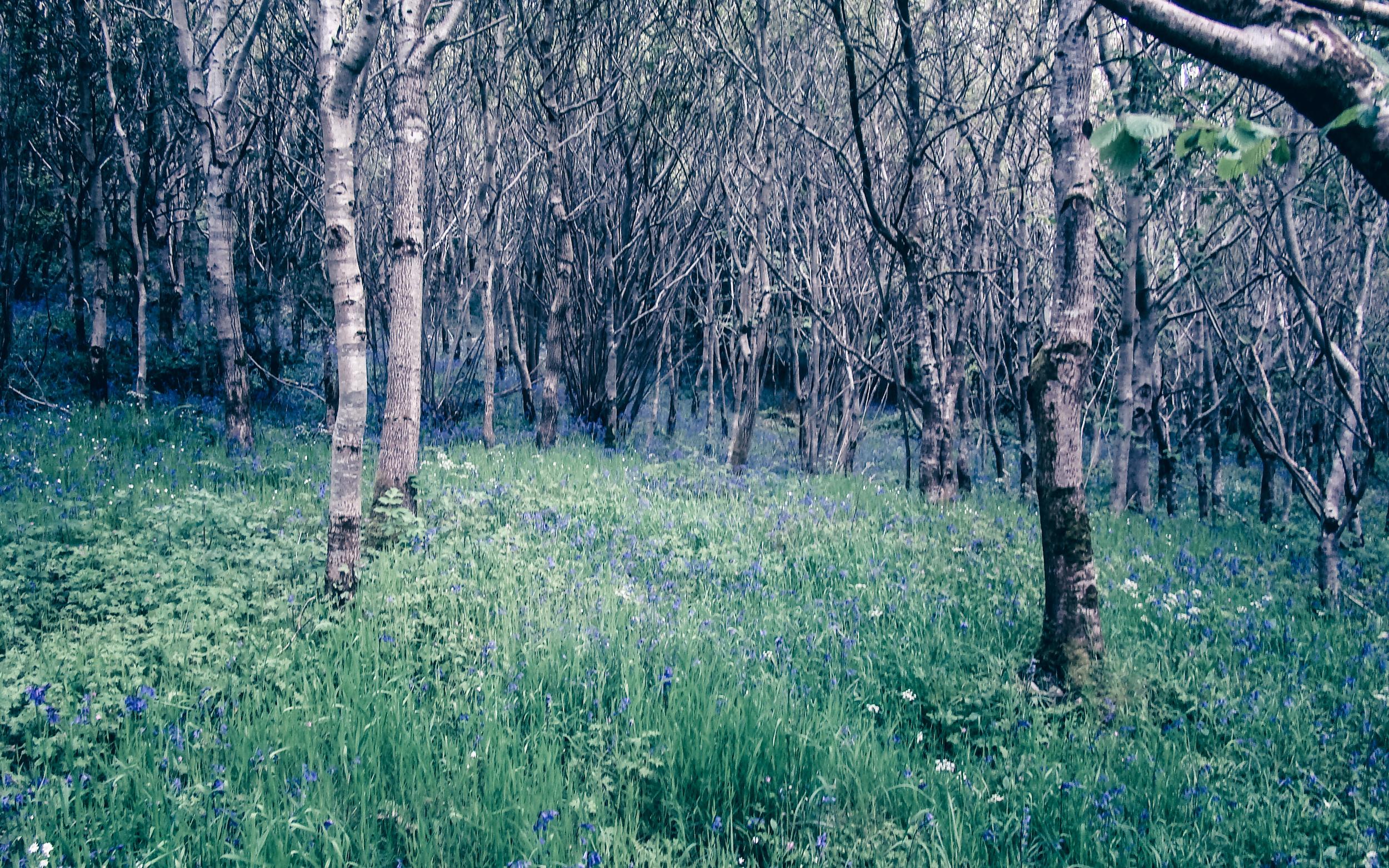 Strahack farm native woodland.jpg