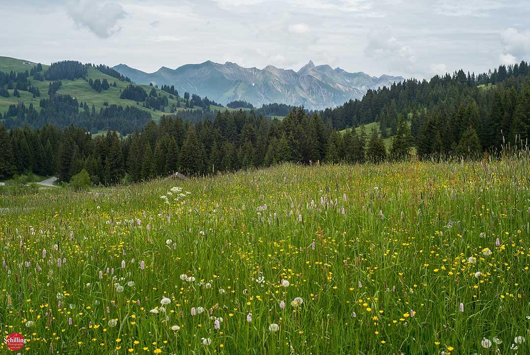 Gratuitous Switzerland Near Les Mosses