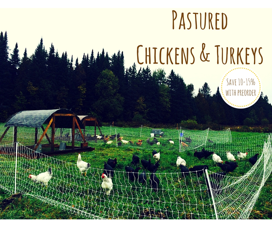 PasturedChickens & Turkeys (1).jpg