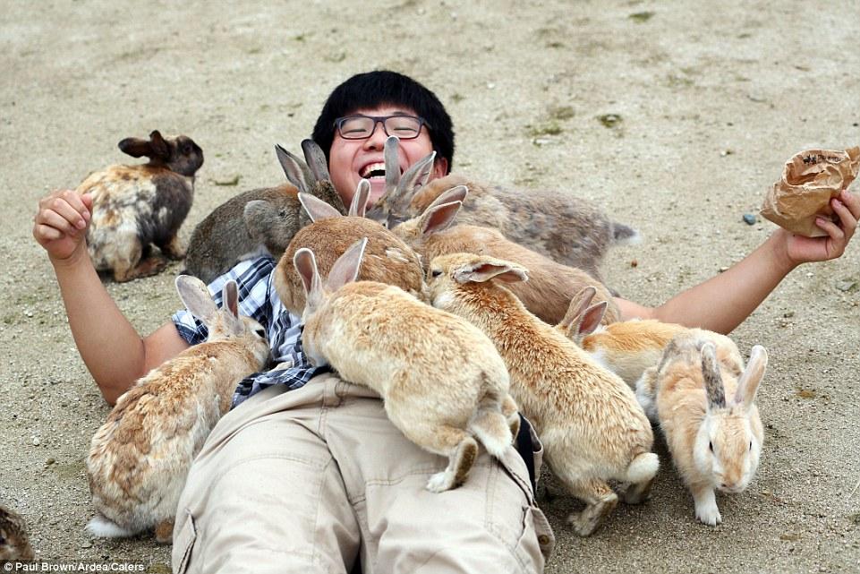 japan bunnies