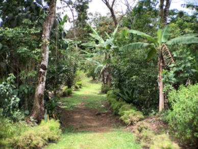 Trail at Finca Luna Nueva.