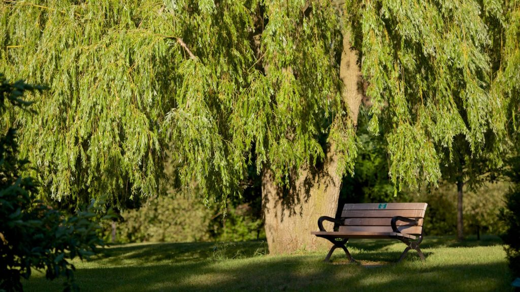 83223-Collingwood-Arboretum-1024x576.jpg