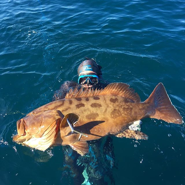 It's grouper Tuesday! #grouper #fishing #loscabos #bassfishing #bassfishingnation #indigoadventures