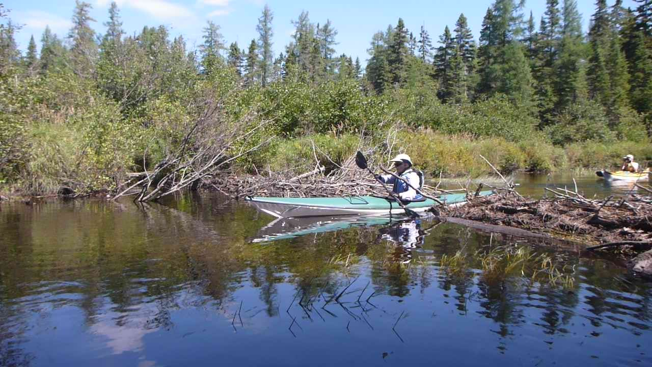 Noela Reel from Hohokus, NJ slides through a break in a beaver dam on the Saranac River, North Branch.  Alan Mapes