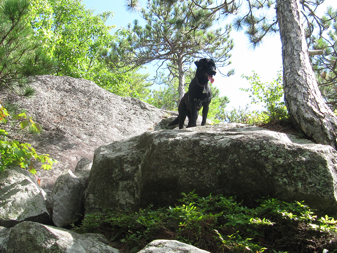 Toby on Rattlesnake Mountain in the Adirondacks.