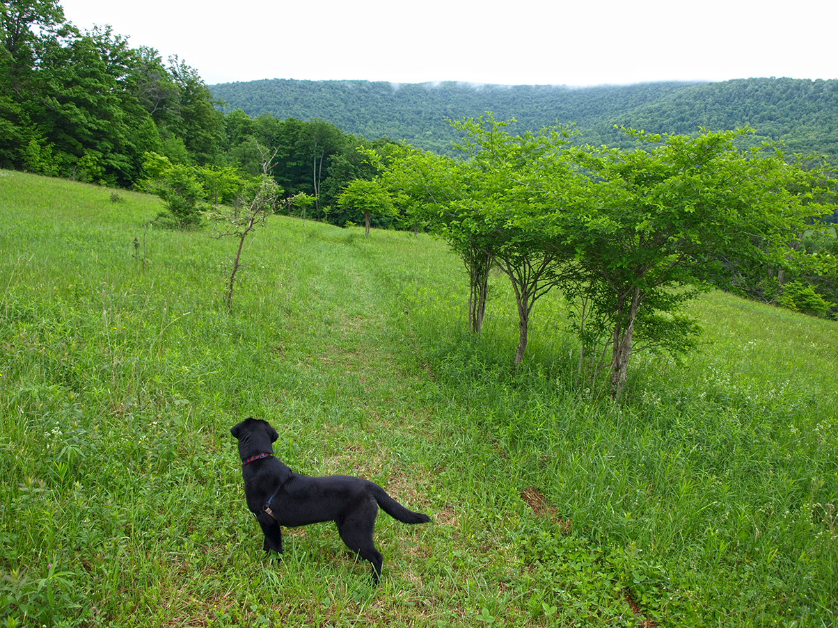 Toby on New Palmer Hill Trail in the Catskills.