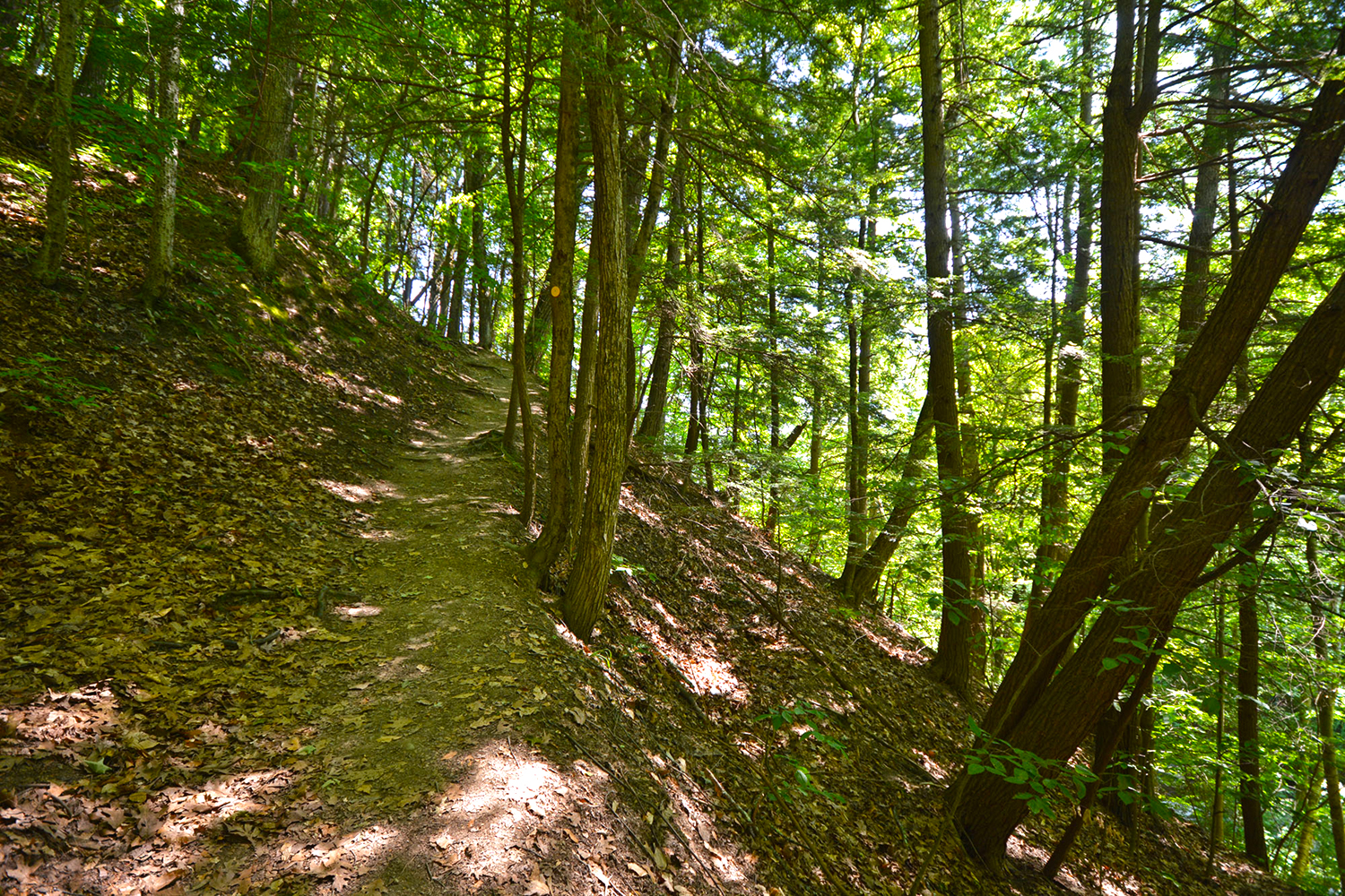 The only official trail down into the ravine, downstream from Upper Falls, is steep and narrow. © Dave Kraus