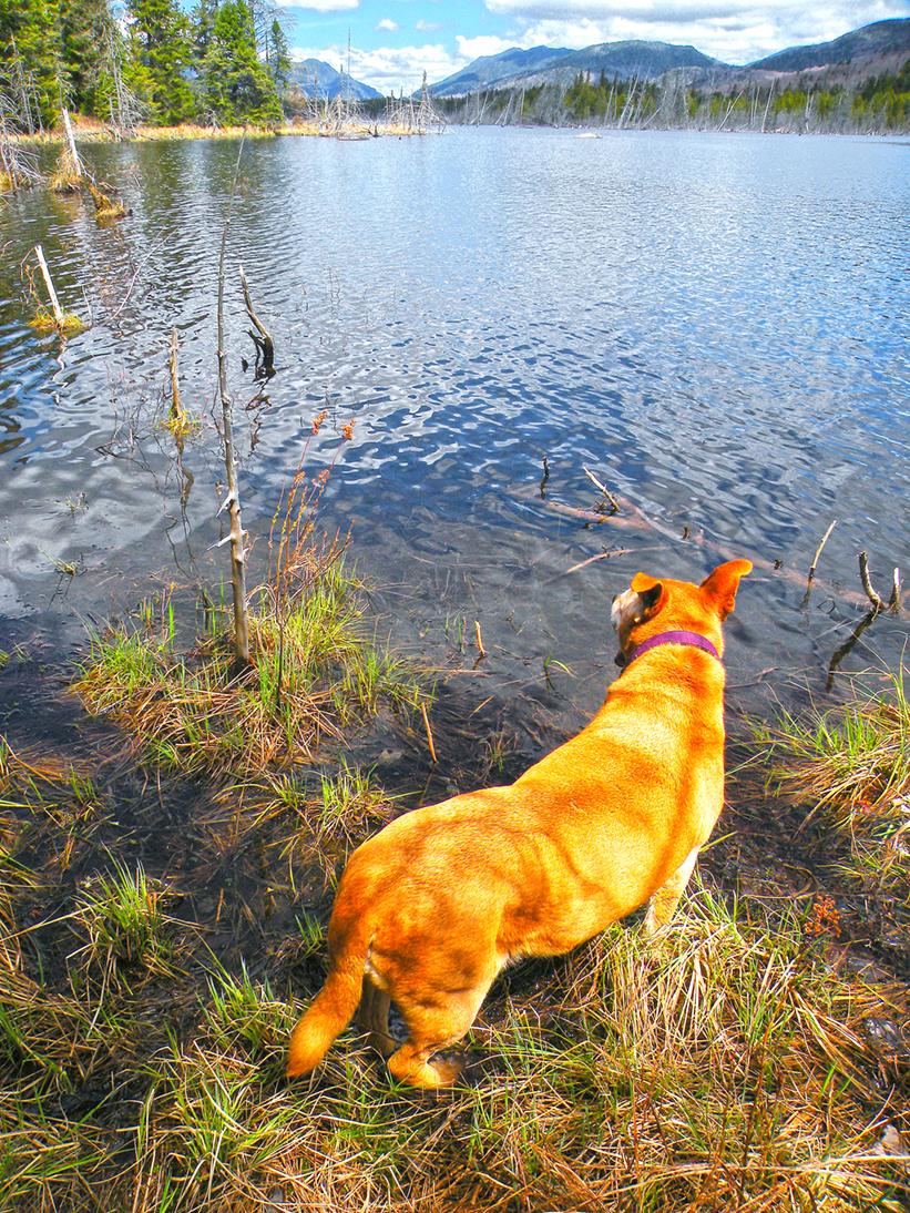 Lexie enjoying the pond's edge.  Bill Ingersoll