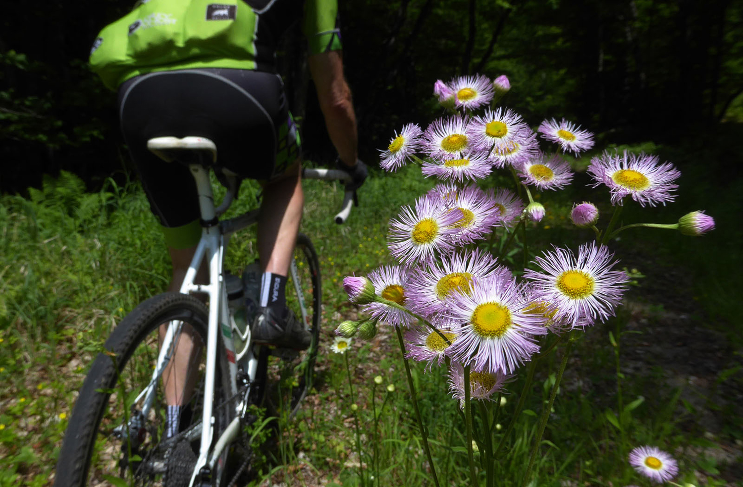 It's easy to find a wide variety of wildflowers blooming as you ride down the forest roads. © Dave Kraus/ Krausgrafik.com