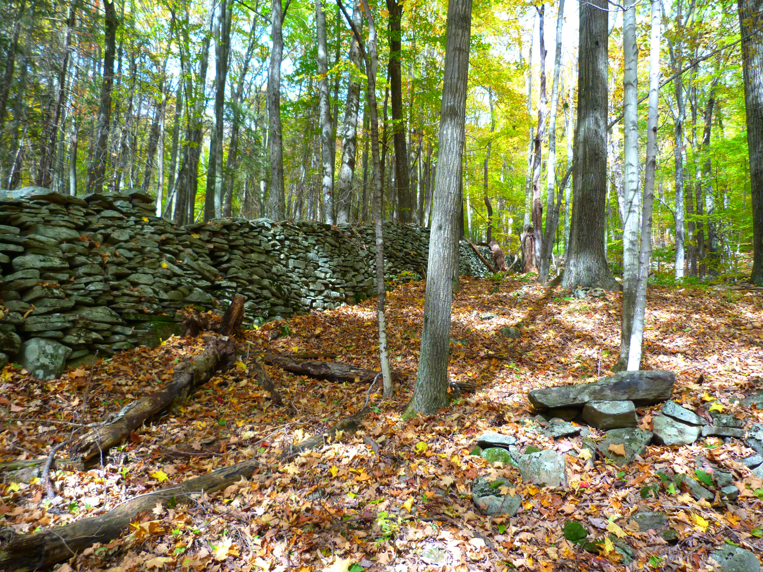 A stone fence along the   forest road of the Rochester   Hollow hike.   Mike Cruz