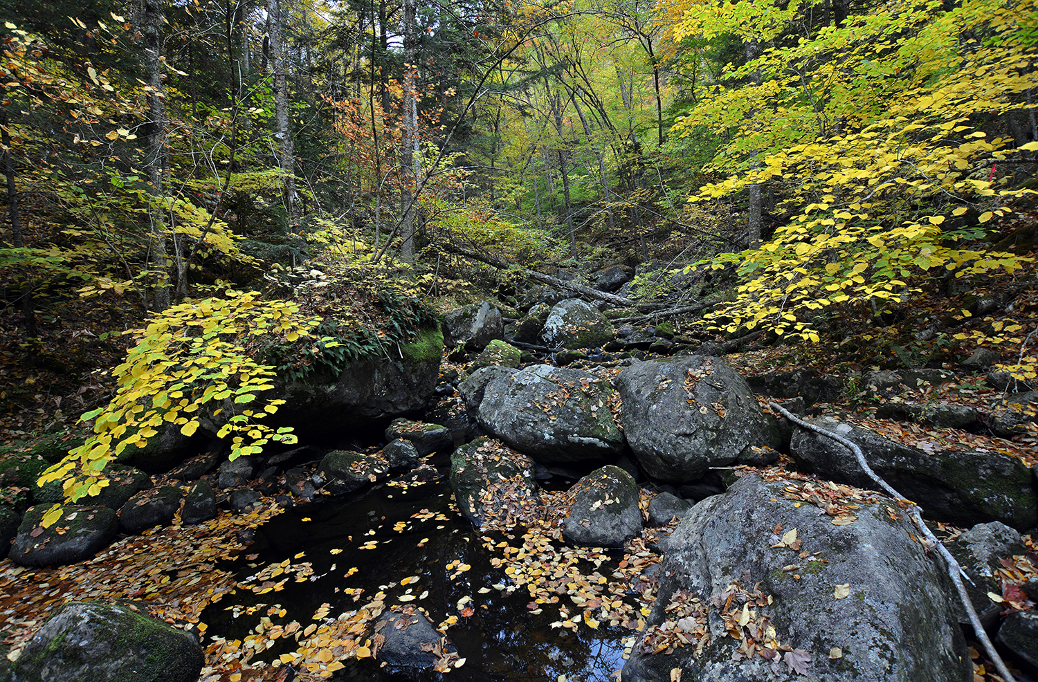 Depths of OK Slip Brook ravine just upstream from Hudson River_1588.JPG