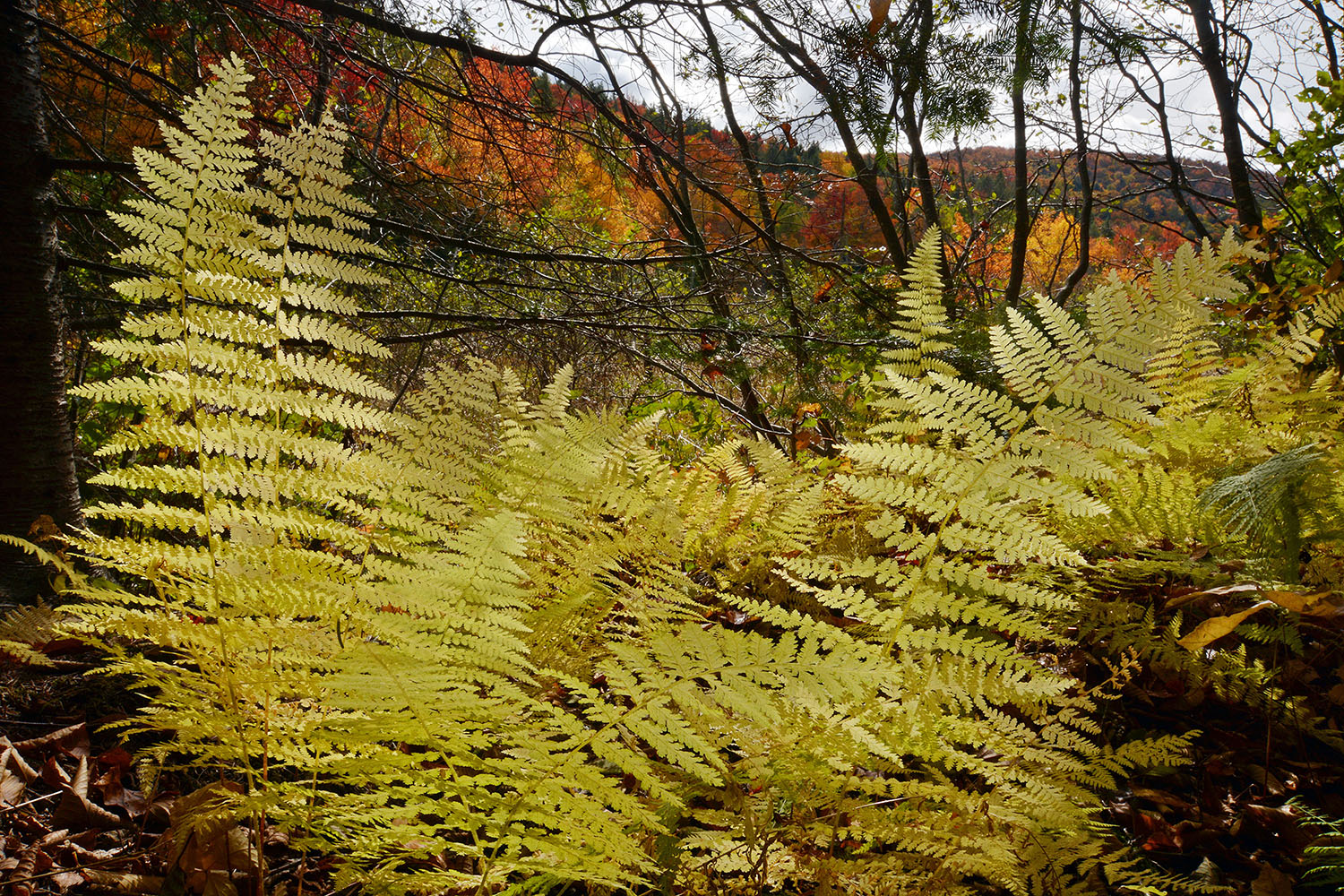 Foliage along trail just before dirt road_1414.jpg