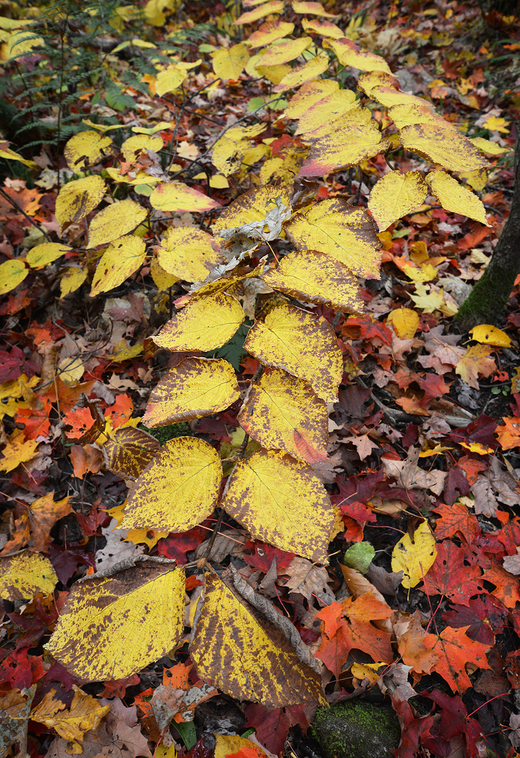 Foliage on trail_1342.JPG