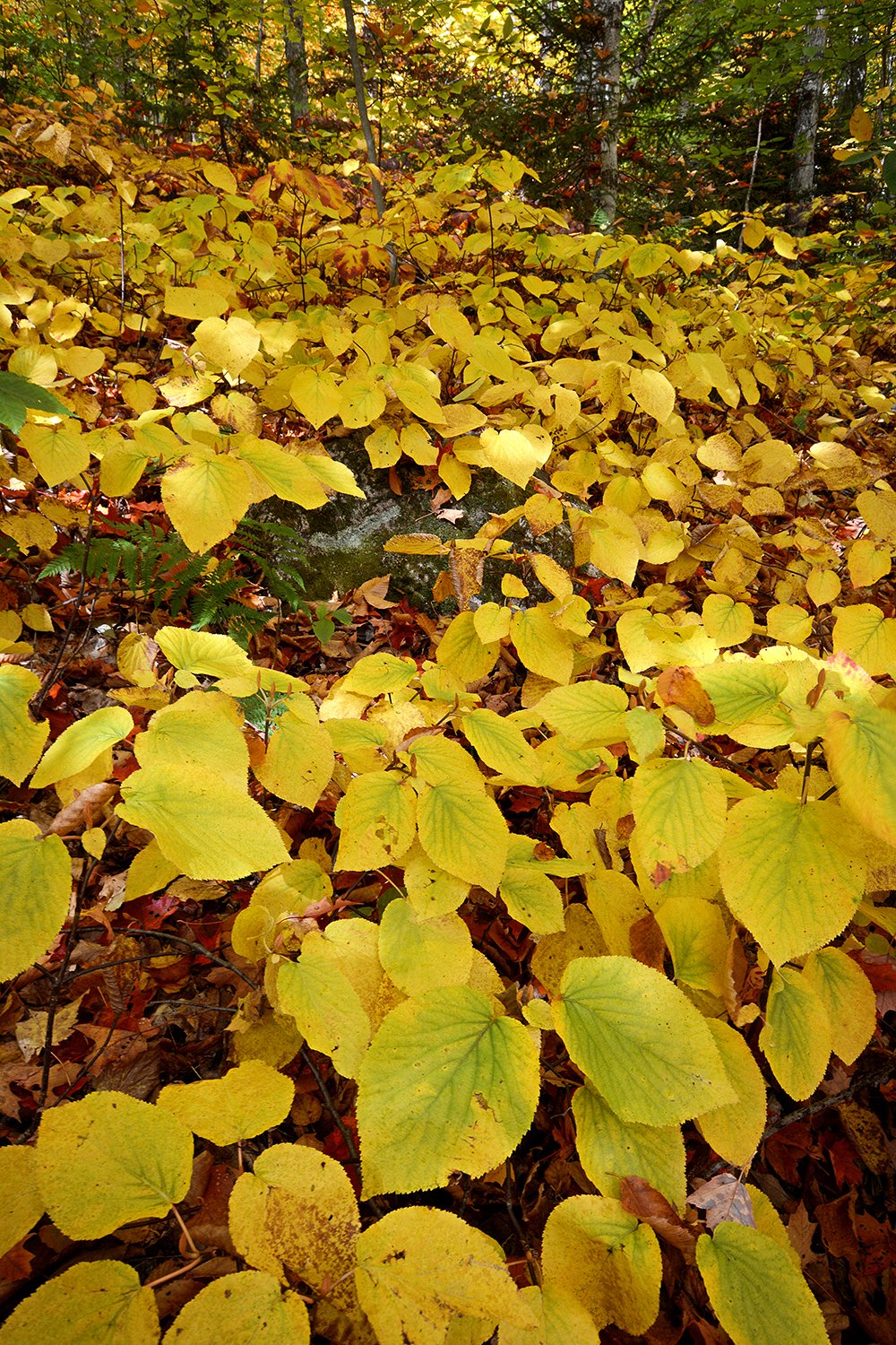 Foliage on trail_1386.JPG
