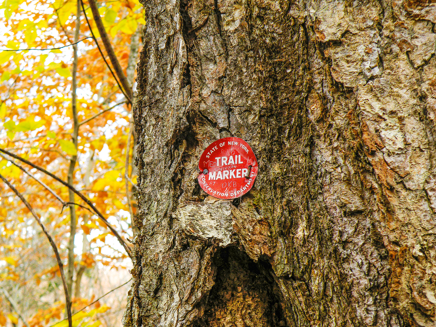 You may spot One of the old Metal trail markers that were in vogue half a century ago.  Bill Ingersoll
