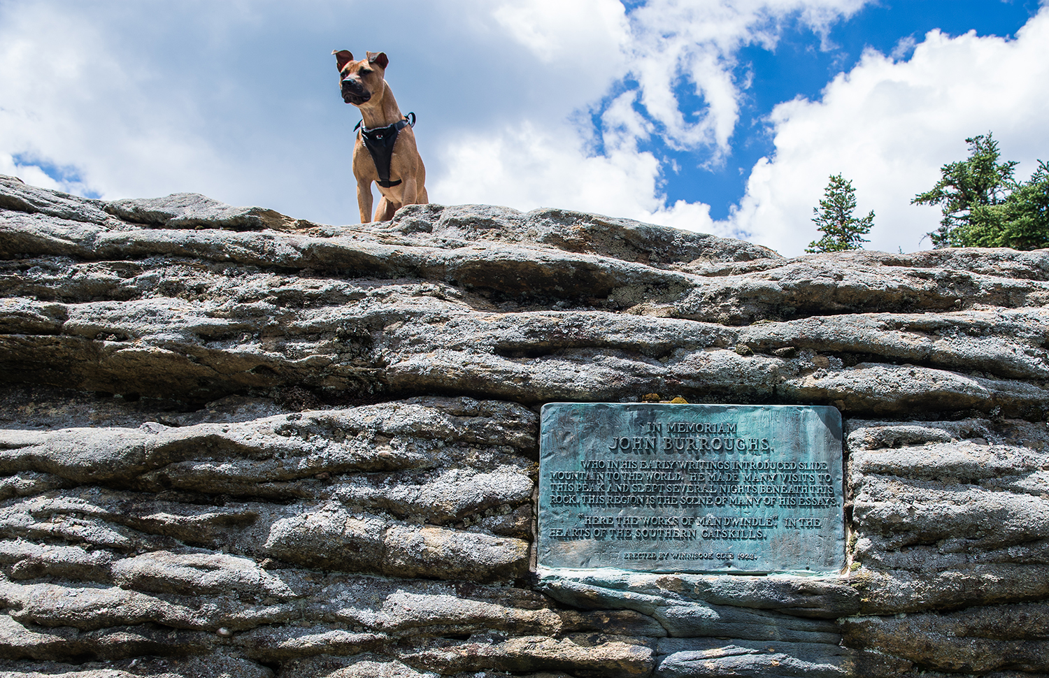 John Burroughs memorial plaque on the summit of Slide Mountain.  Steve Aaron Photography