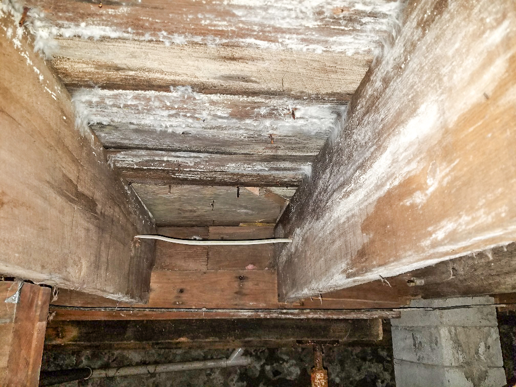 Mold on basement roof, behind wallpaper and on drawer liner   (below) .  Arch Environmental
