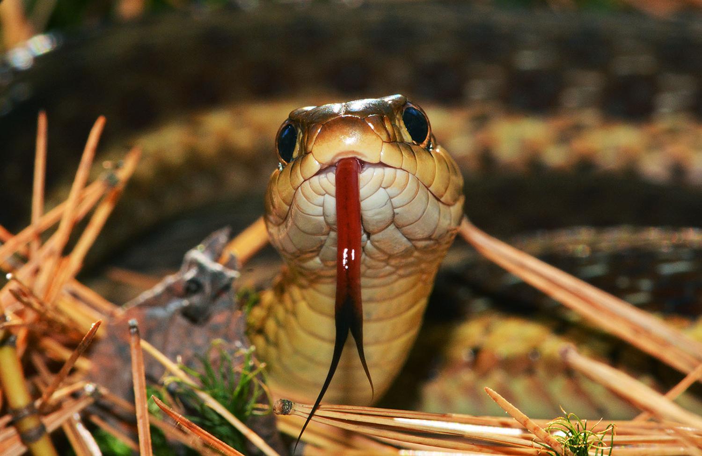 Trailside snake encounter.  Dave Kraus/   krausgrafik.com