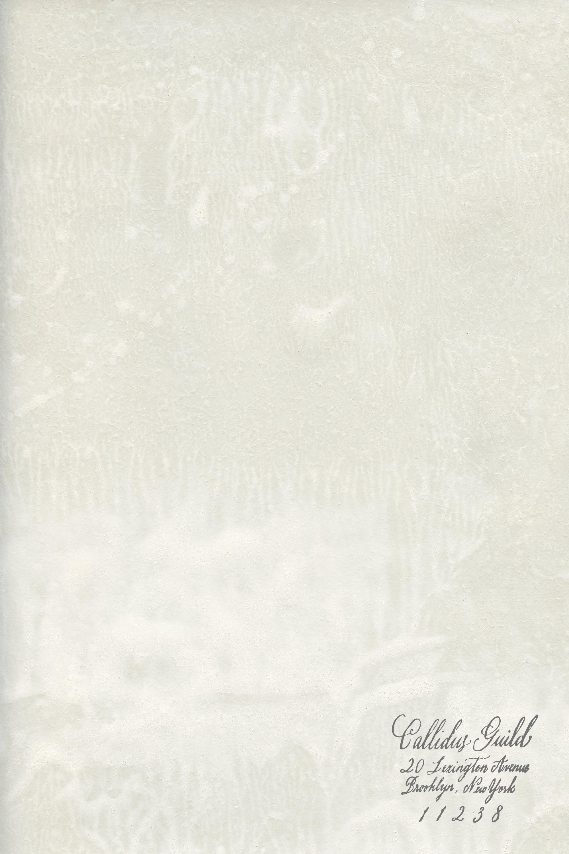 WP-1843 Chaux - Ivory
